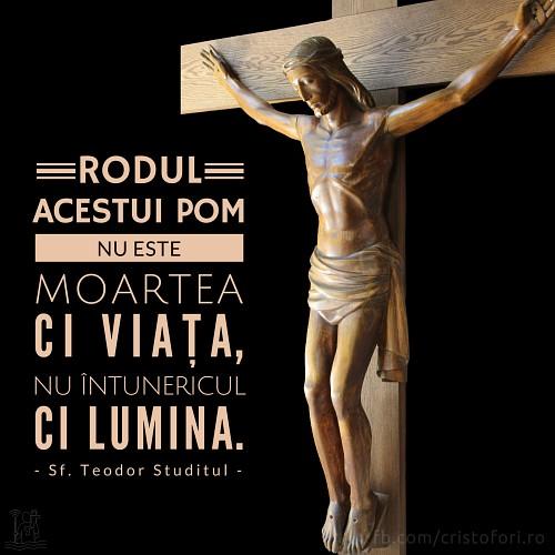 Rodul pomului Crucii